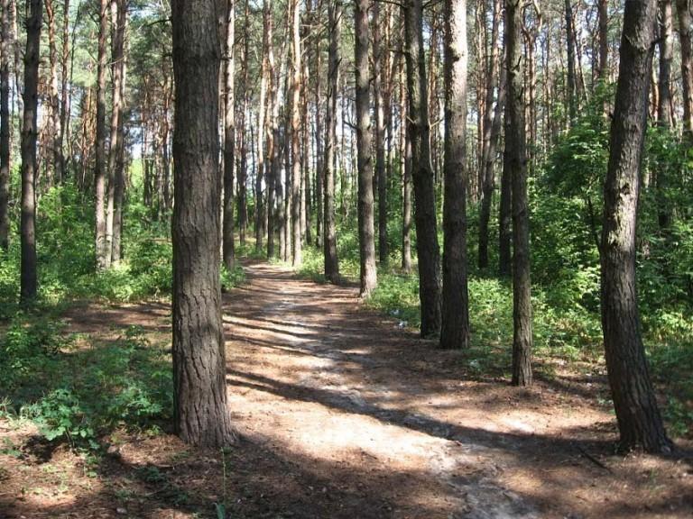 Здоровье курского леса проверили столичные лесопатологи